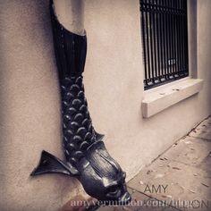 Savannah – fish downspout