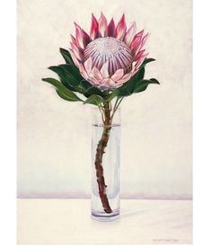 King Protea - original oil painting by Eleanor Butler available on… Protea Art, Protea Flower, Art Floral, King Protea, You Draw, Botanical Prints, Vintage Flowers, Painting & Drawing, Pastel Drawing