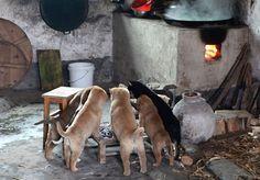 【春よ来い】「寒い寒い」と暖を取るキュートすぎるわんこファミリー+を見つけたよ!/+あまりの寒さに囲炉裏のきりたんぽ状態