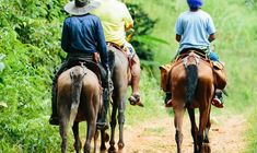 Costa Rica, Quepos, Family Show, Location Map, Exotic Plants, Round Trip, Walking In Nature, Horseback Riding, Waterfall