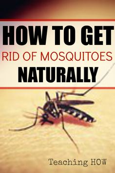How to get rid of mosquitoes naturally... Because for how to tips - Click on the following link!  http://www.teachinghow.com/get-rid-mosquitoes-naturally/