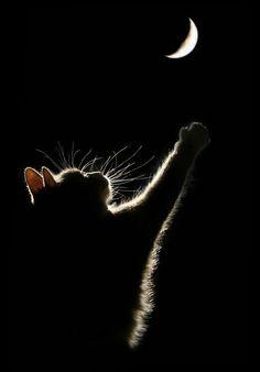 Staring at the moon