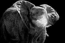 Wolf Ademeit, Dusk, 2008 / 2014 © www. Elephant Artwork, Wolf, Aesthetic Grunge, Dusk, Photo Art, Portrait Photography, Lion Sculpture, Wildlife, Artsy