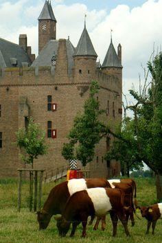 Nederlandse boerderijdieren: Lakenvelder Koeien, Kasteel Doornerburg, Gelderland.