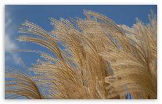 autumn_breeze-t2.jpg (510×330)
