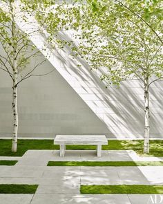 Whitespire birches shade a bench by Jenny Holzer | archdigest.com