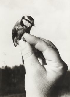 ImageFind images and videos about black, white and black and white on We Heart It - the app to get lost in what you love. Little Birds, Love Birds, Beautiful Birds, Haus Am See, Foto Fun, Jolie Photo, Bird Feathers, Black And White Photography, Pisces