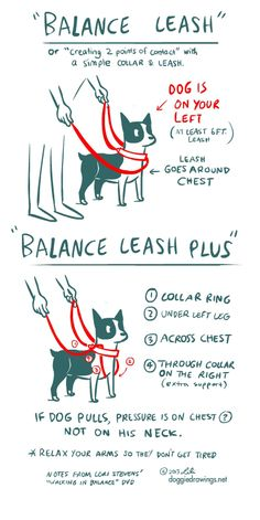 The Balance Leash with 2 points of contact- which to me, looks quite complicated. I had to sketch it out to memorize what goes where.