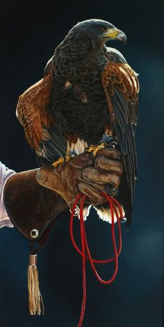 Falconer…. I want to learn to work with birds….On the top of my to do list when I move.
