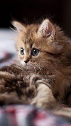 Curious kitty.