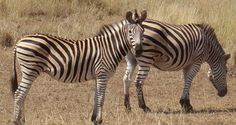 Book SA Holidays to stay between the BIG 5 Animals Big 5, South Africa, Holidays, Books, Animals, Holidays Events, Libros, Animales, Animaux