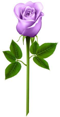 Purple Rose Transparent PNG Image