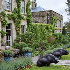 English Country Inns: The Pig Near Bath in Somerset, England