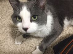 Tom Here! See, I am a cool dude – I like my people, Humans are a cool breed – and I also LOVE food. Second Chance Animal Rescue, Tommy Lee, My Past, Love People, The Fosters, Cats And Kittens, Toms, Adoption, Cool Stuff