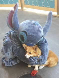 Corgi Spends The Day With Famous Disney Characters