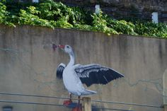 Goose Mural Coimbra Me As A Girlfriend, Bird, Photography, Animals, Photograph, Animales, Animaux, Birds, Fotografie