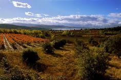 Paysage et couleurs d'automne du Luberon en Provence