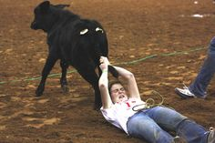 Calf scramble at Houston Livestock Show and Rodeo in 2012.