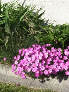A mixed flower bed.
