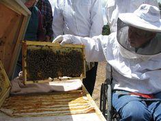 COBKA Hive Inspection