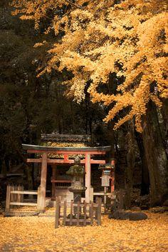 Autumn in Kasuga 春日の秋