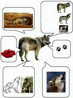 Arctic Animals, Forest Animals, Farm Animals, Animals And Pets, Preschool Science, Science For Kids, Science And Nature, Animal Activities, Activities For Kids