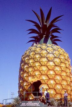 The Big Pineapple, Sunshine Coast, South East Queensland, Australia - This 16 metre high pineapple opened August 1971 with two rides inside; one a Nut Mobile and the other on a small train taking tours of the plantation. Unusual Buildings, Interesting Buildings, Amazing Buildings, Sunshine Coast, Big Pineapple, Unique Architecture, Pavilion Architecture, Sustainable Architecture, Unusual Homes