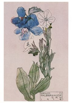 Charles Rennie Mackintosh - Borage