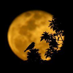 "ex0skeletal:  (via 500px / Photo ""Moon, Bird and Tree"" by Carlos Gotay)"