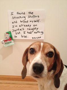 Santa's Naughty List - Beagle