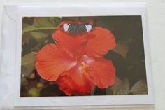 Hibiscus with Butterfly Blank Photo Note Card by manukai on Etsy