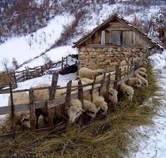 Where Shepherds Walk ✧