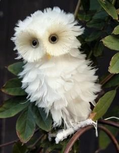 Magnificent Photos - #23 of 34 - This has to be the cutest white owl in the world!  (63 pieces)