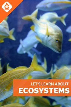 Ecosystems lesson for and grade science. Learn about Ecosystems with a fun video Science Videos For Kids, Lessons For Kids, Science Activities, Stem Science, Science Education, Outdoor Education, Ecosystems Projects, Science Words, Teacher Association