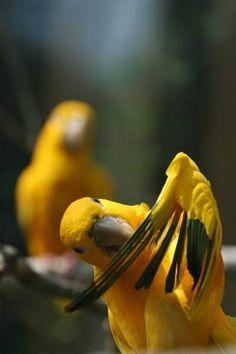 Parrots                                                                                                                                                                                 More