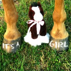 Gender reveal announcement with horse and hooves #babygirl