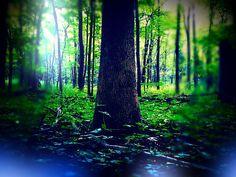 Neverland, enchanted tree