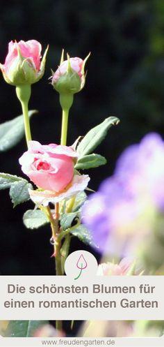 Bauerngarten Oder Cottage Garten Anlegen: Mit Diesen Pflanzen Gelingt Dir  Ein Romantisches Paradies. #