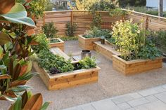 Raised Planter, Raised Garden Beds, Raised Beds, Garden Fire Pit, Fire Pit Backyard, Edible Plants, Edible Garden, Vegetable Garden Design, Garden Images