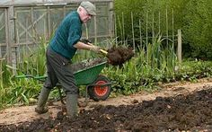 Hnojivo - tekuté, granulované, tyčinkové, pevné, tabletové atd. http://www.rostliny-semena.cz/cz/hnojiva-pro-rostliny/