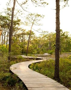 Deck madera   sendero en el bosque