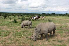 White rhino spotted on The Waterberg Trust Challenge Ride through South Africa