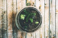How to make your own green terrarium to keep or give away for the holidays