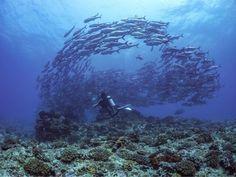 沖縄県粟国島の海日記 ダイビングハウス粟国