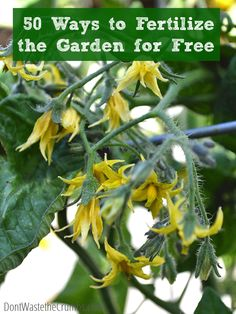 50 ways to fertilize the garden for free - great ideas you probably hadn't heard of, but could easily do from home!  :: DontWastetheCrumbs.com