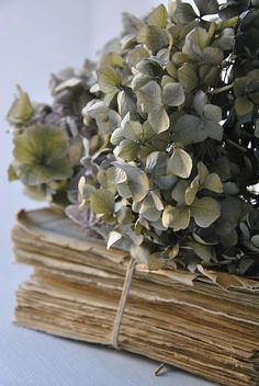 Hydrangea on a book found at Shabby Soul