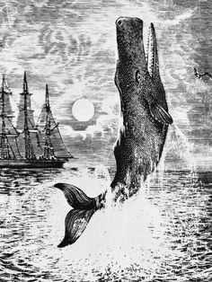 """""""Moby Dick by Herman Melville, book of a lifetime: A playful, experimental novel"""""""