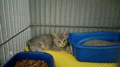 Griffin GA shelter animals.  Adopt and Foster.  https://www.facebook.com/Spalding-County-Animal-Shelter-184442991586329/