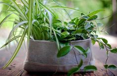 Small-Scale Gardening: Woolly Pockets, recycled plastic bottle soft containers