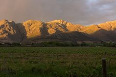 Beautiful late afternoon in Franschhoek . photo by Lucia du Preez Wedding and Lifestyle Photography   South African Wine, Luxury Accommodation, Wine Country, Lifestyle Photography, Provence, Acre, Vines, Mountains, Wedding